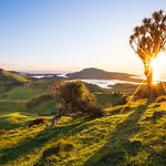 Otago Peninsula Sunrise from Peggy's Hill