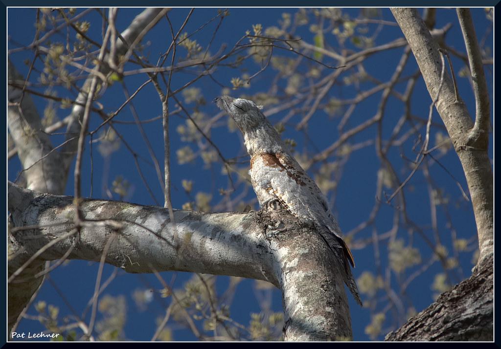 c'est une branche ou un oiseau ?