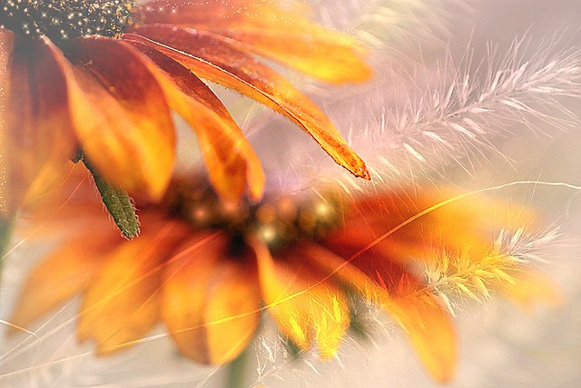 Flowers in autumn. a slider :-)