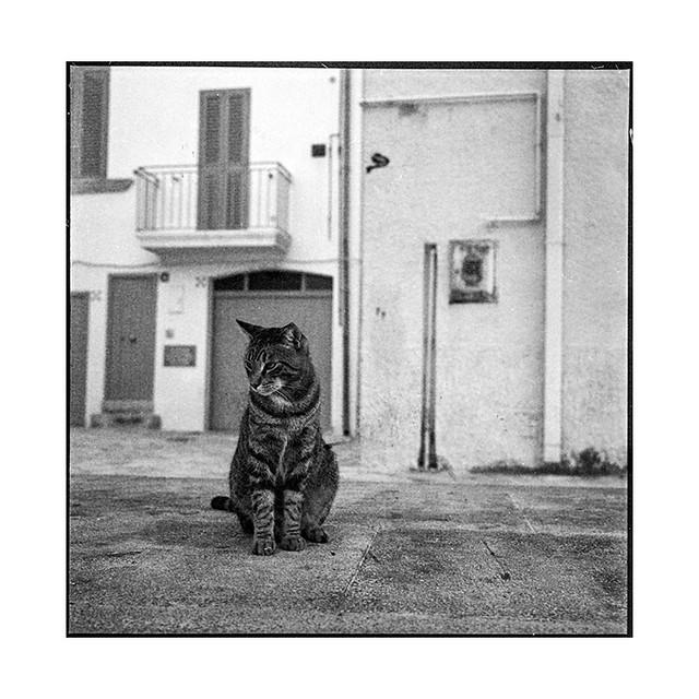 grainy cat • puglia, italy • 2018