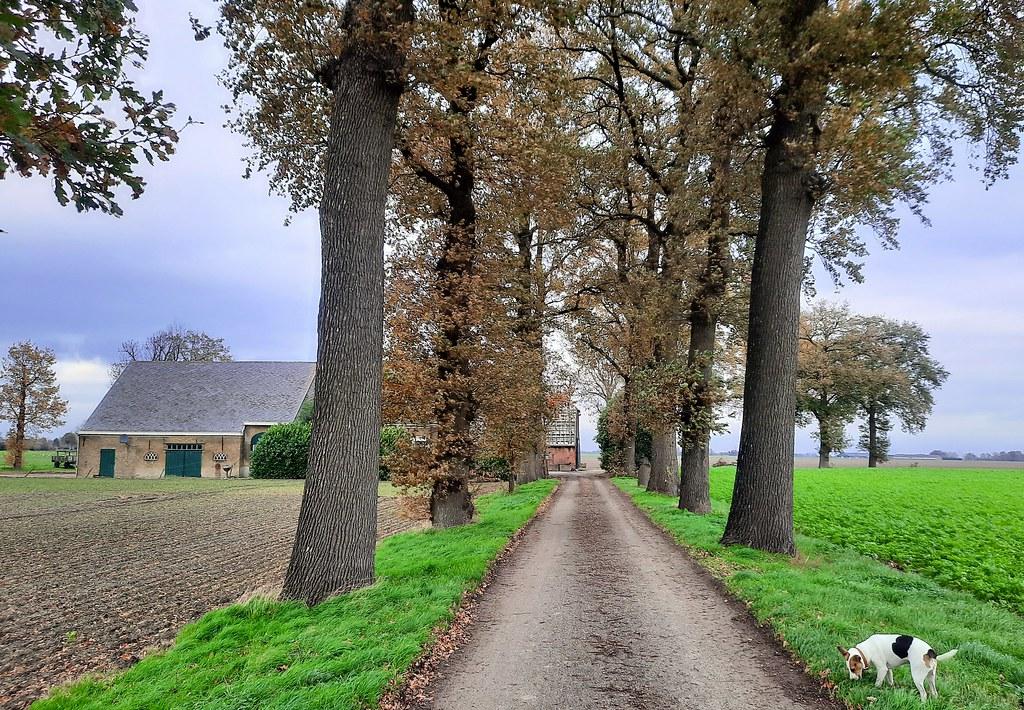 boerderij bij Wouw