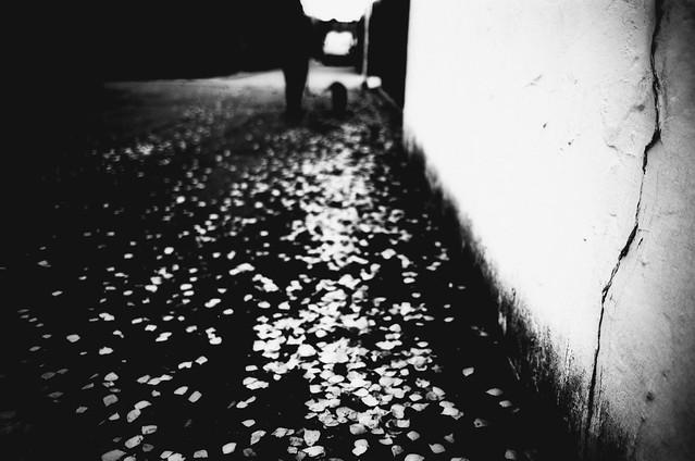 Walking on leaves (Leica M6)