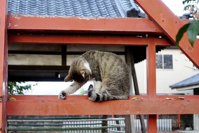 Today's Cat@2020−11−22