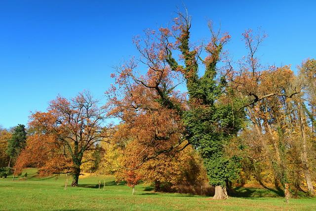 Autumn in the castle park.