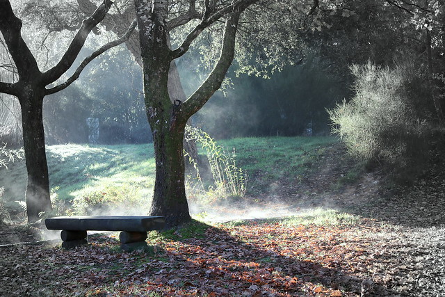 seignosse brouillard matinal