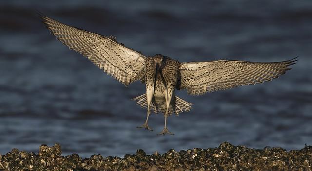 New bird of prey?