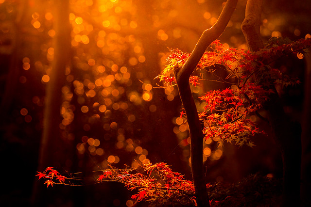 Autumnal evening sunlight