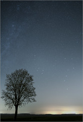 Ursa Major and the single Tree