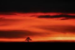 lonely Tree @ Sundown