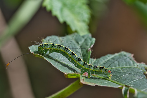 caterpillar | by vineethkartha