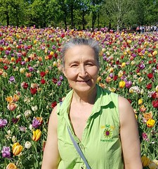 In the tulips