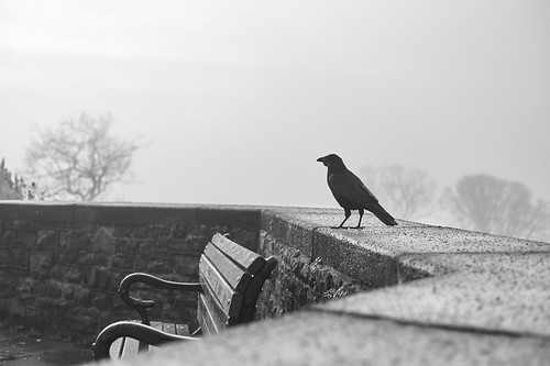 "Image titled ""Crow, Brandon Hill."""