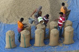 Pack peanuts in Bandarban Town