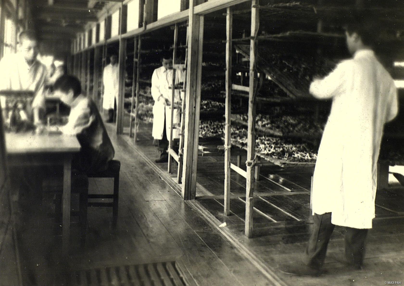 14. Лаборатория опытной шелководческой станции, где происходит кормление шелковичных червей. Префектура Токио, Татикава местность