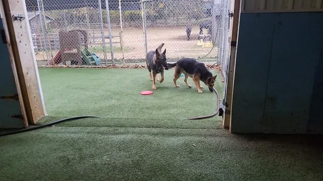 11_22_20 Frisbee! :)