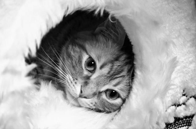 Spritz in his igloo