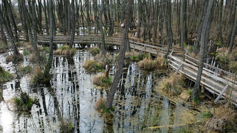 Fényes Marsh Nature Trail, Tata, Hungary