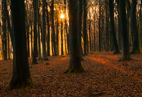 wood woodland wooded woods woodlandwalk woodscape tree trees treetrunks forest south england light landscape lightroom golden orange leaves yellow sun sunshine englishcountryside eveninglight evening westsussex sussex autumn autumnal autumnalcolours southdownsnationalpark southdowns nationalpark november canon canon77d canoneos77d countryside composition relaxing walk relax peaceful peace wildham