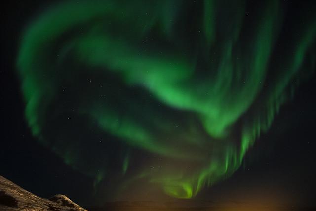 wild aurora