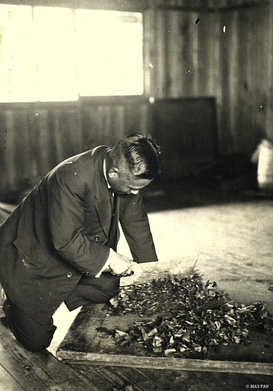 13. Сечка листьев тутового дерева новым способом