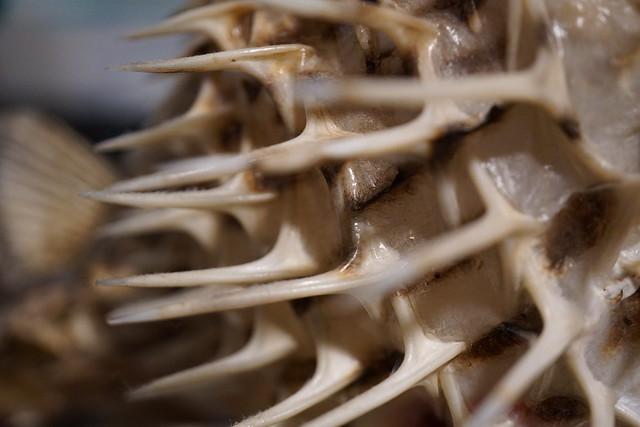 Spiky - Macro Mondays