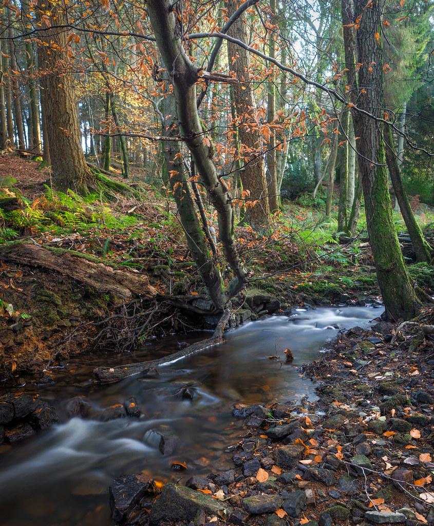 Ashdown Forest stream.