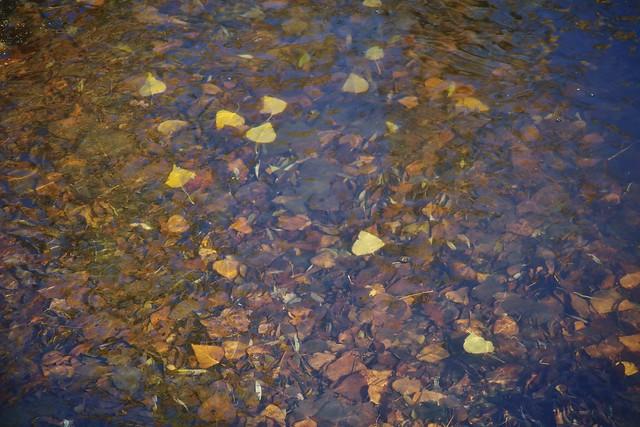 Autumn under water