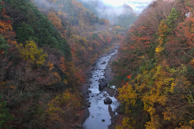 Foggy Autumn Ravine