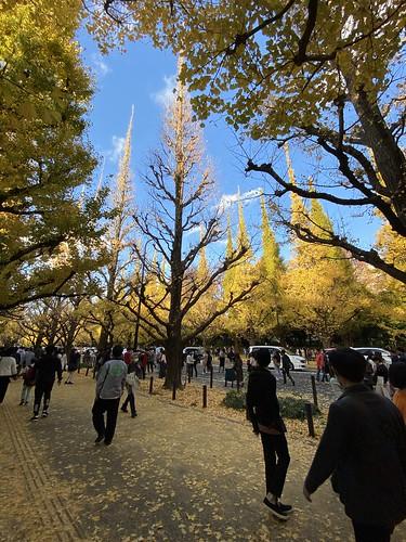 神宮外苑 いちょう並木 2020/11/22