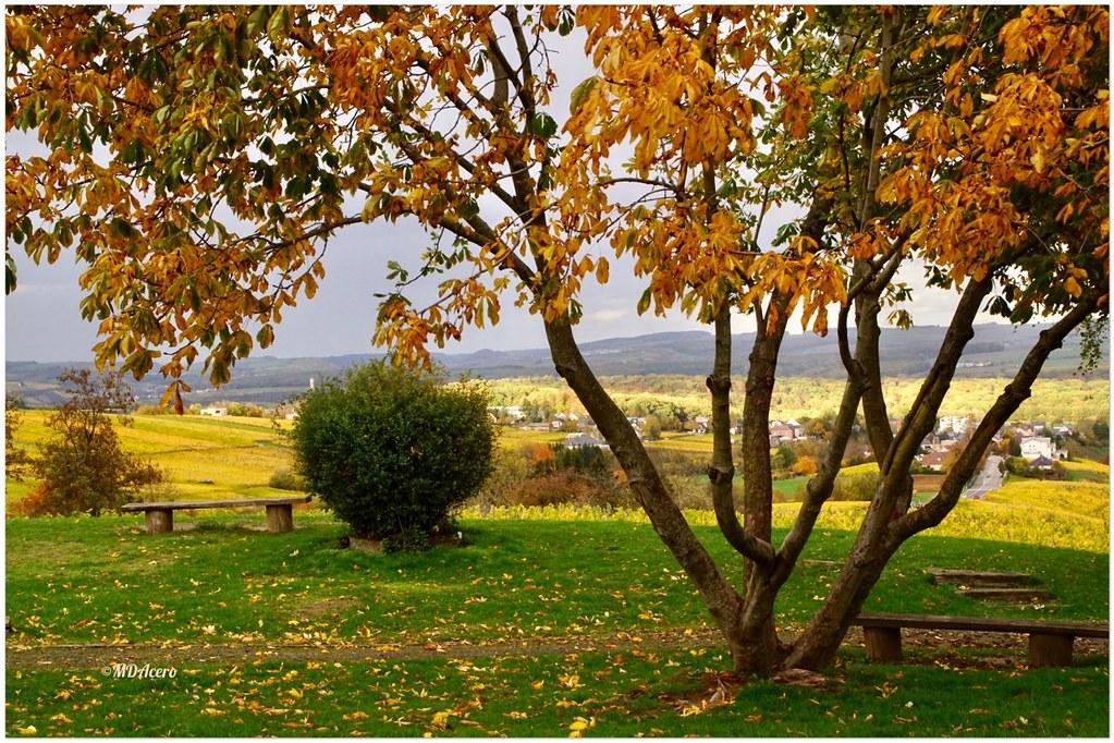 Un paseo en otoño (Explore XI/2020)