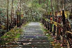 Selva de Yacambú.