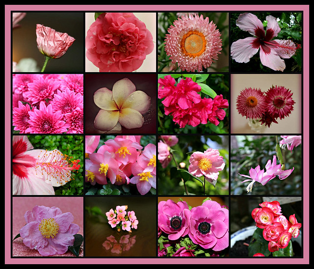 Pink Flowers collage #7