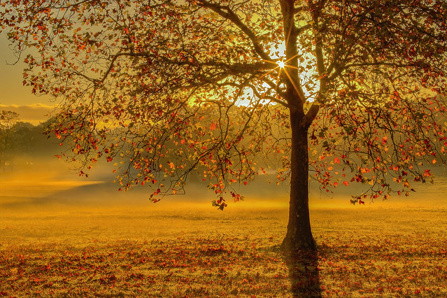 Semplicemente Autunno / Simply Autumn (2.0, Windsor Great Park, Berkshire, United Kingdom)
