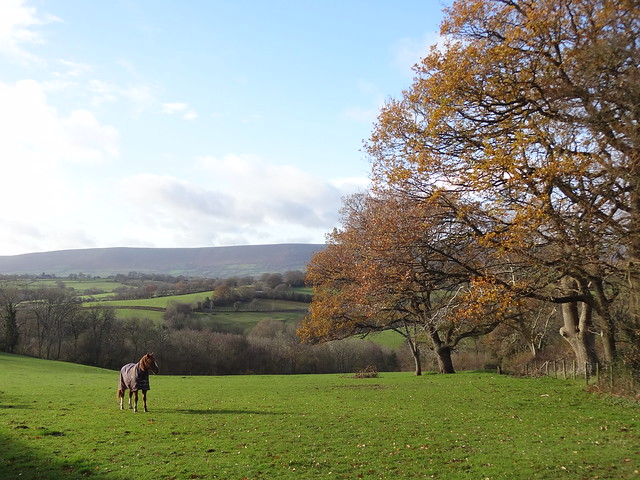 Horse, Fair Oak Farm