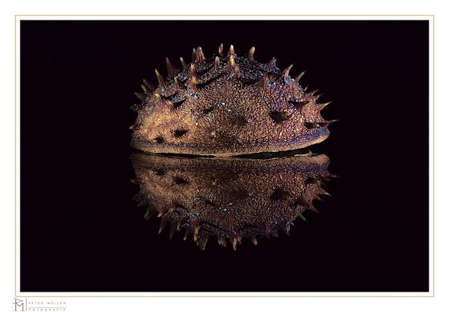 Macro Mondays, spiky