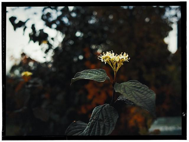 Autumnal # 11