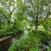 """<p><a href=""""https://www.flickr.com/people/ausken/"""">AusKen</a> posted a photo:</p>  <p><a href=""""https://www.flickr.com/photos/ausken/50637349496/"""" title=""""Blarney Castle_14Jun19_132321_65_6DII_01""""><img src=""""https://live.staticflickr.com/65535/50637349496_816589d697_m.jpg"""" width=""""240"""" height=""""160"""" alt=""""Blarney Castle_14Jun19_132321_65_6DII_01"""" /></a></p>"""