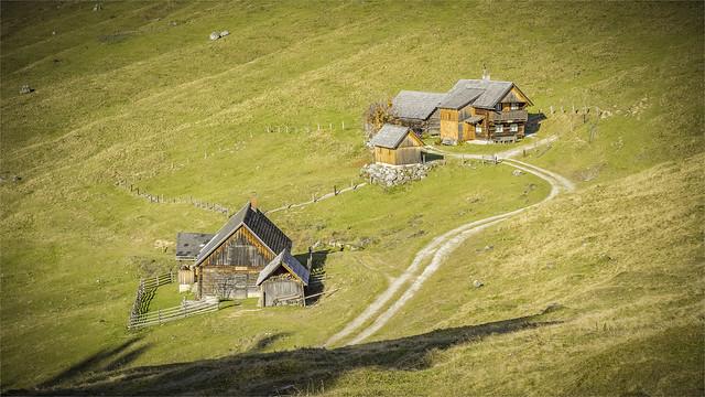 _DSC30254 Alpine pasture