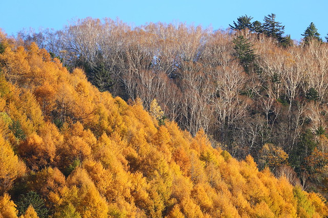 Autumn ---Come and Gone---