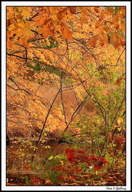 October - Autumn foliage in the woods