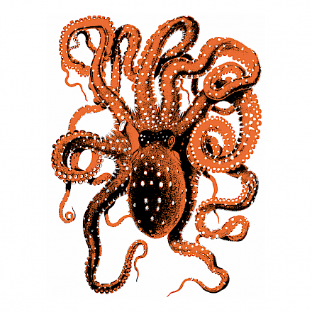octopus_social_media_no_text.440x0