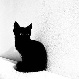 Chat Noir | by laajis