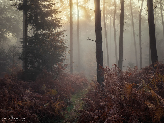 Burning through the mist