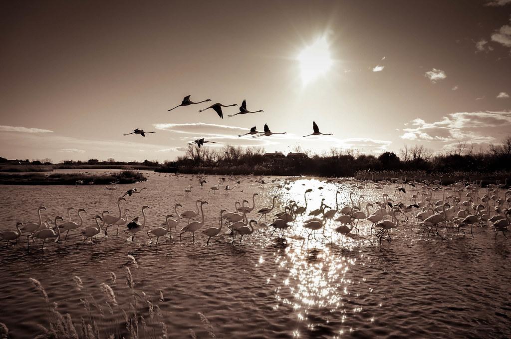 «Pour prendre son envol, il faut découvrir ce qui nous donne des ailes»