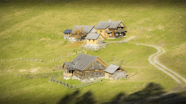 _DSC30252 Alpine pasture