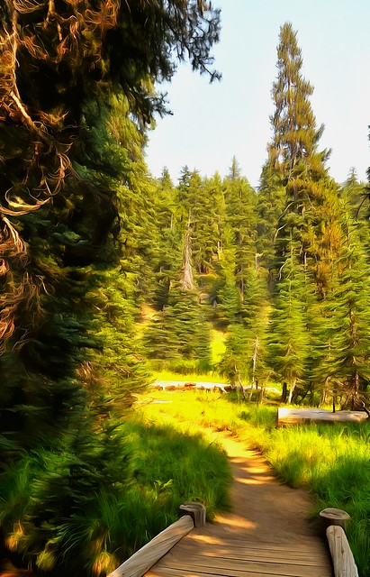 Into the forest - Crater Lake