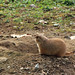 "<p><a href=""https://www.flickr.com/people/debiwatson/"">DebiWatson</a> posted a photo:</p>  <p><a href=""https://www.flickr.com/photos/debiwatson/50638300556/"" title=""Zoo America Prairie Dogs""><img src=""https://live.staticflickr.com/65535/50638300556_402f74bd9b_m.jpg"" width=""240"" height=""178"" alt=""Zoo America Prairie Dogs"" /></a></p>"