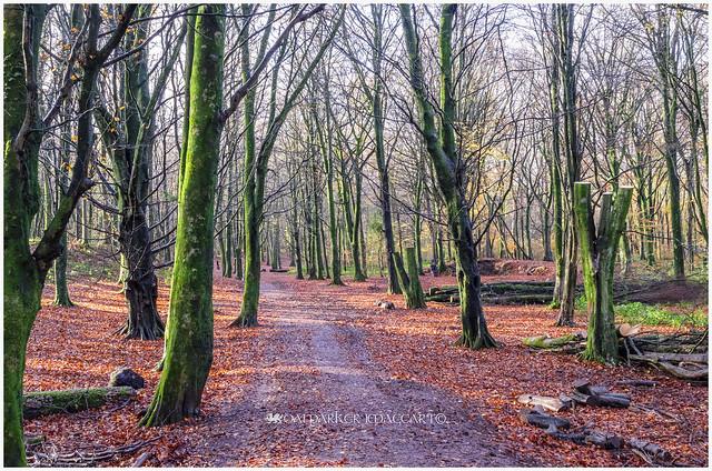 A Path Into Autumn
