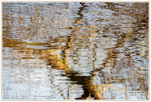 Reflets d'automne sur les bords de l'Erdre