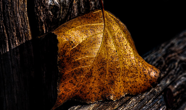... autunno (01) ...